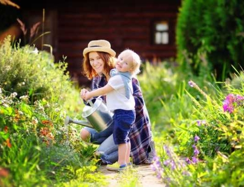 Things to Know Before Beginning Your Gardening
