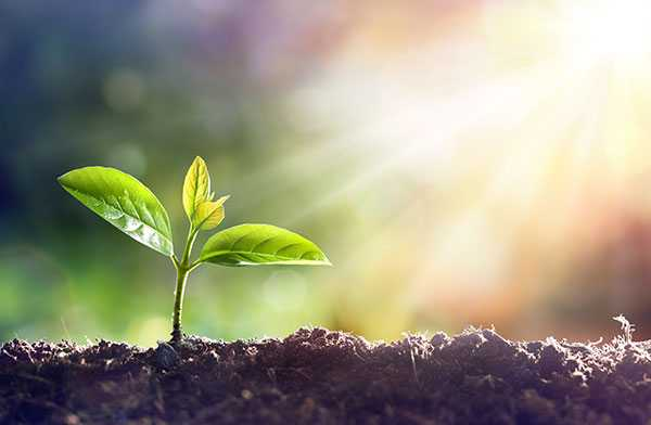 Sun Plant