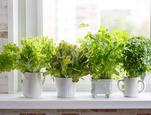 How To Start Your First Container Garden