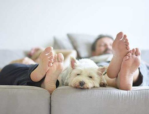 How to Have a Happy Home with Dogs