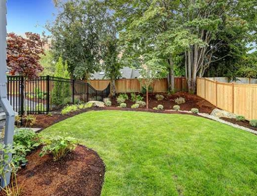 Let Your Garden Grow – Landscaping and Gardening at a Glance