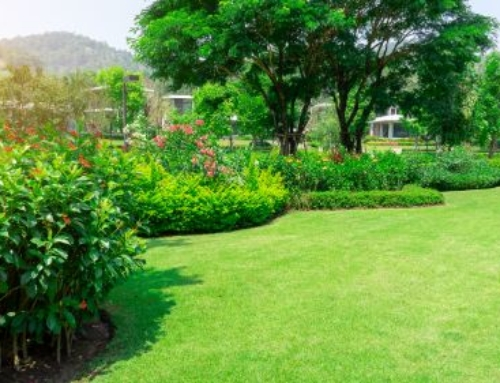 Lawn Care and Landscaping Maintenance